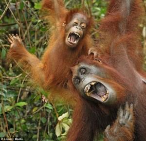 Primati che cantano